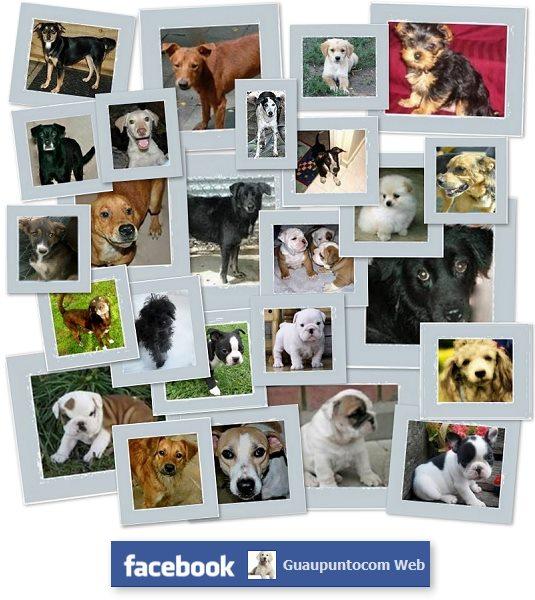 Guaucom Adoptar Un Perro Listado De Todas Las Protectoras De
